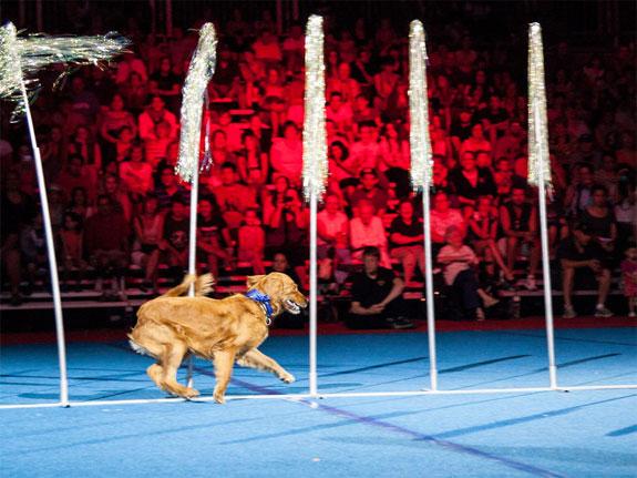 cne-superdogs